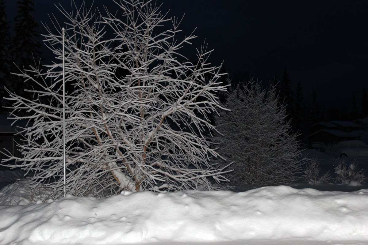 #travel #Alaska #lifestyle #fashion blog for women over 40 - trees in snow at night @ High Latitude Style @ http://www.highlatitudestyle.com