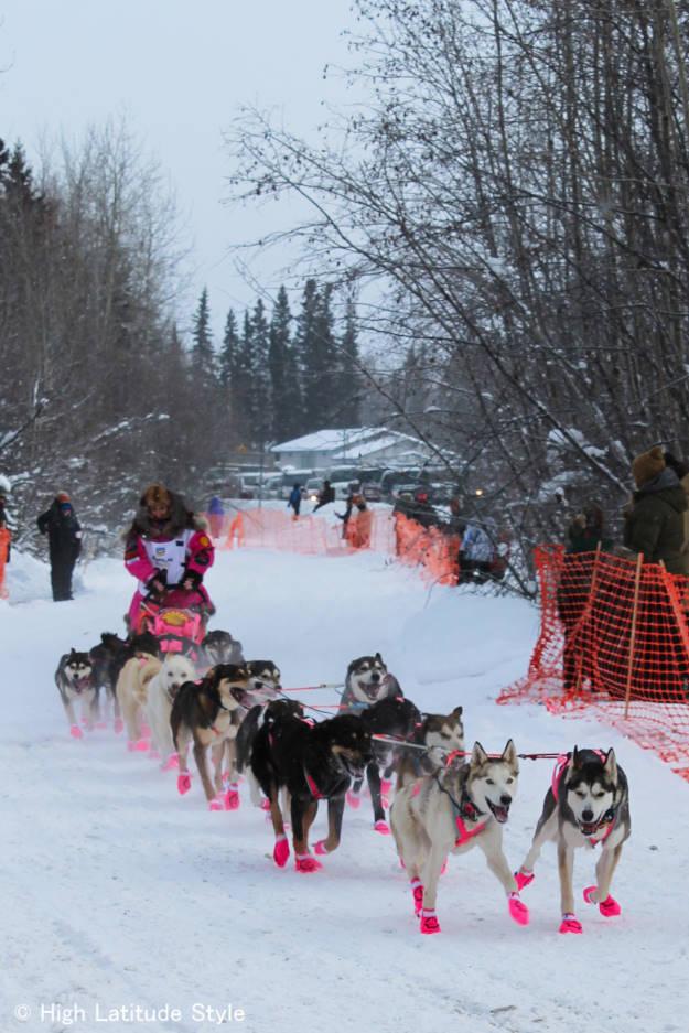 dog mushing in Interior Alaska