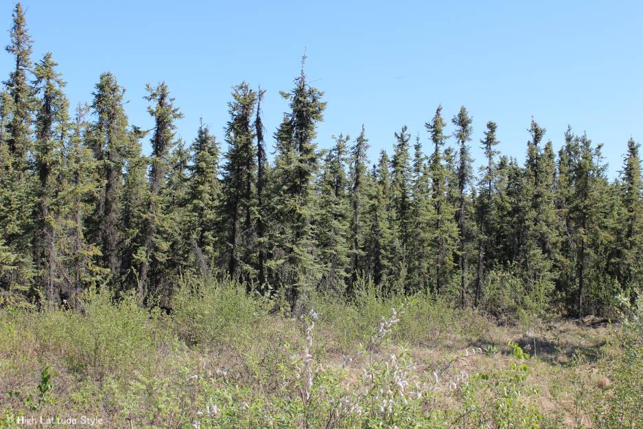 #permafrost #Alaska landscape in Interior Alaska #travel