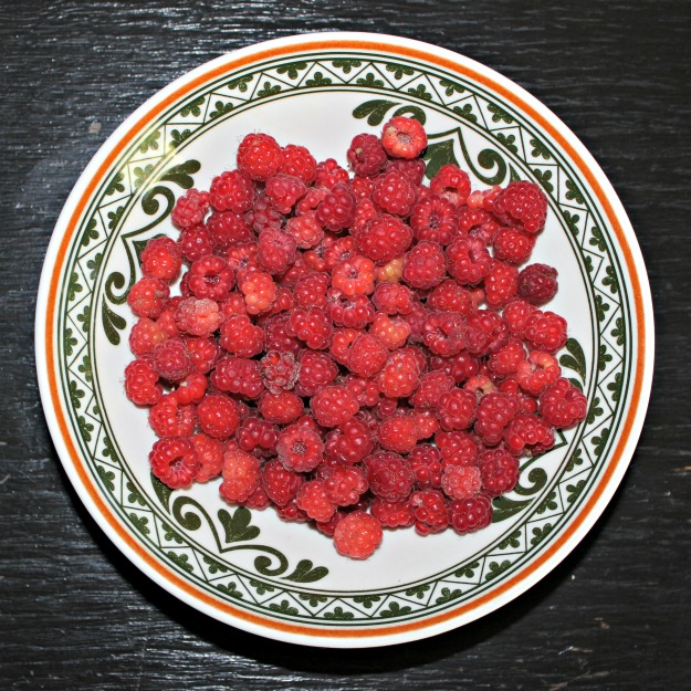 #FocusAlaska #berrypicking Alaska raspberries