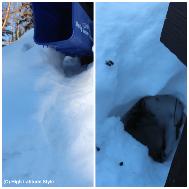 Alaska wildlife Tunnel made into the snow by squirrels