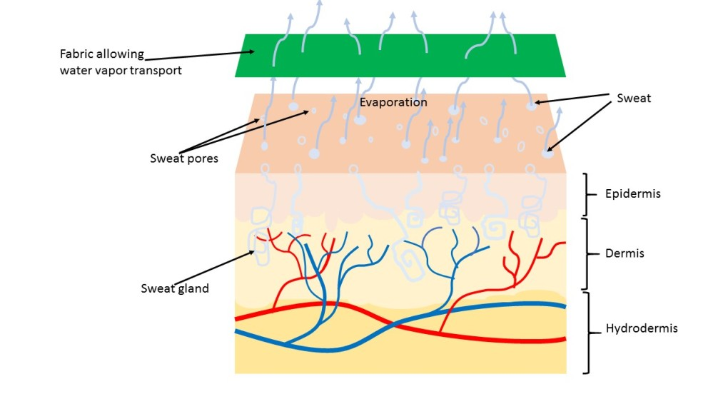 schematic view of moisture transport thru a fabric