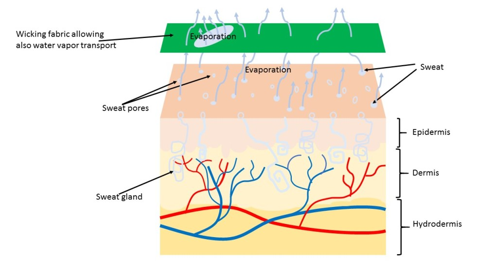 schematic view of moisture wicking fabric