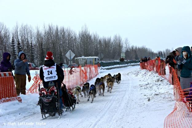 Sled dog team at Iditarod